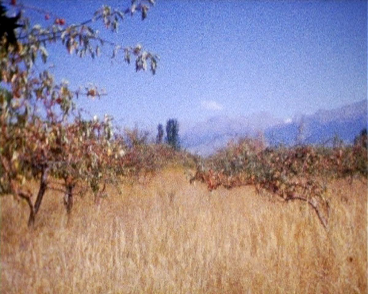 2008, région de Barskoon, un verger, et les rires d'un groupe de jeunes adolescents qui ramassent les pommes.